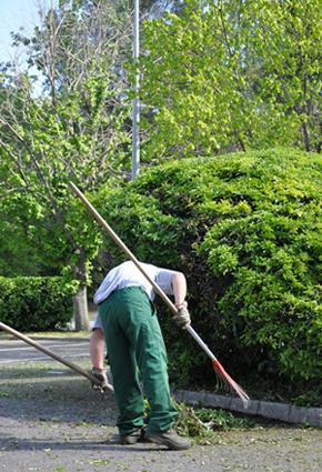 Mantenimiento jardines sierra de madrid for Mantenimiento de jardines